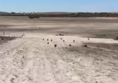 ワンコの群れが水を求めて猛烈ダッシュ