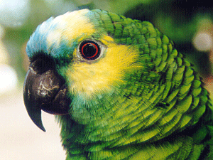Exotic Animal Wallpaper Awc Seeks Improved Care For Exotic Birds In Shelters