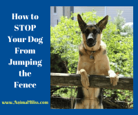 How to Stop Your Dog From Jumping the Fence | Animal Bliss