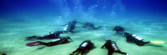 PADI Scuba Certification Course in Jamaica | animal Camp Jamaica