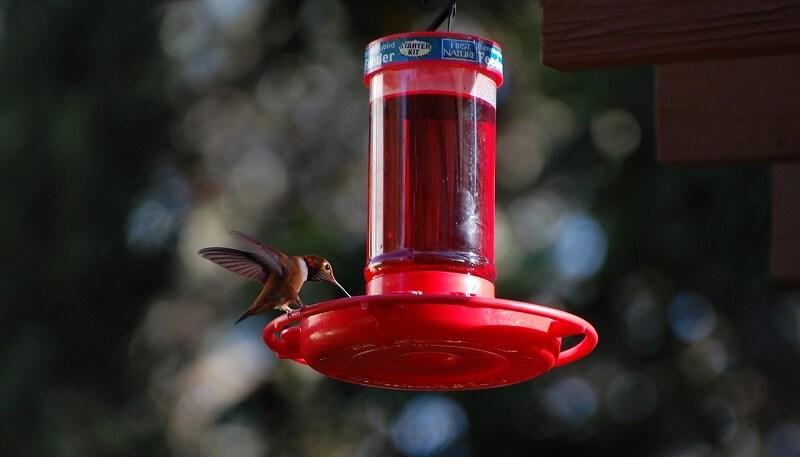 Top 8 Best Hummingbird Feeders To Easily Attract