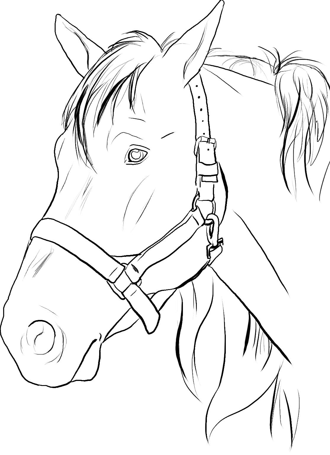 Horse Head Coloring Page - Eskayalitim