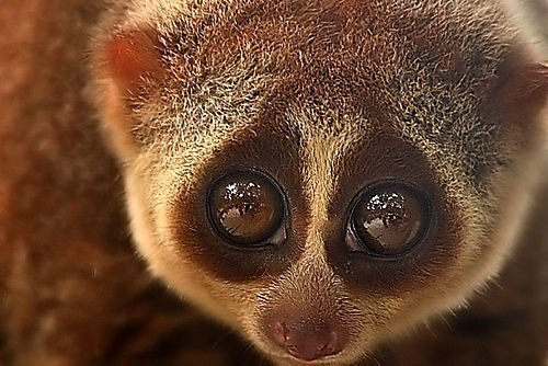 Sloth Wallpaper Cute Cute Animals That Can Be Really Dangerous Animals Zone