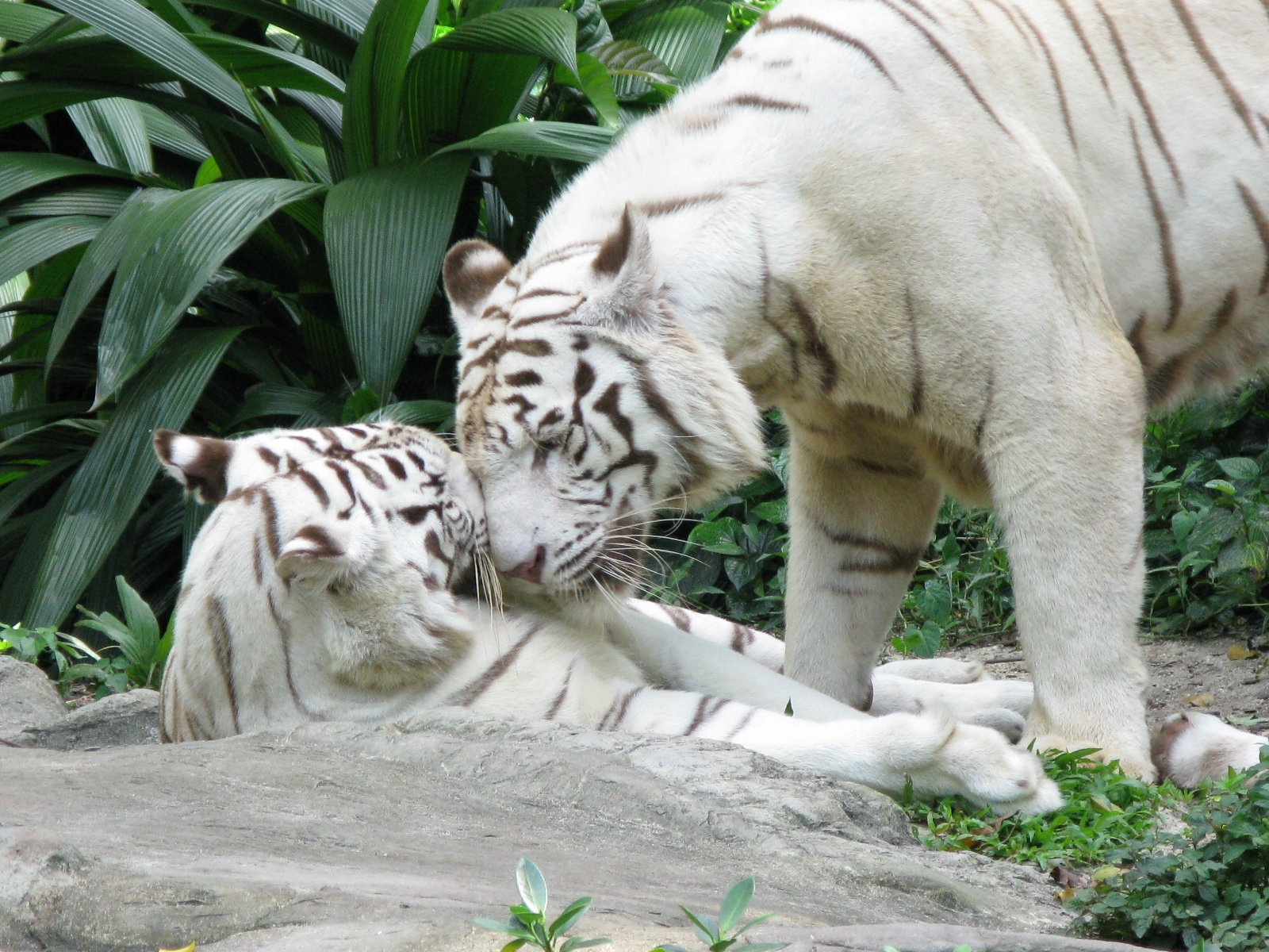 Live Wallpaper Cute Couple Animal Love Cute Photos That Ll Make You Smile Animals