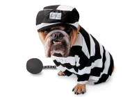 19 Cute and Funny Halloween Costumes for Pets | Animals Zone