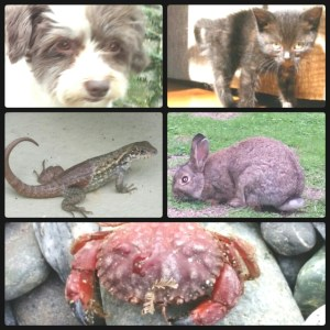 Some of the victim species.