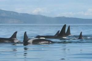 (Orca Network photo)