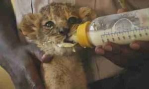Scene from the Kenya Wildlife Service's Wild Animal Orphanage at Nairobi National Park. (KWS photo)