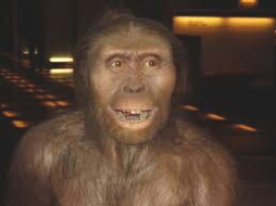 Reconstruction of Australopithicus. (Wikipedia photo)