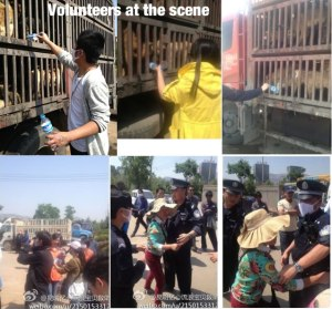 Images of mass rescue of dogs from illegal trade in China.