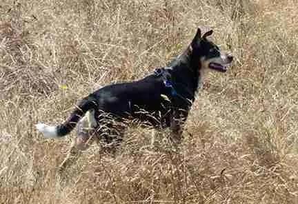 Bo in field
