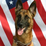 Police dogs should be trained as officers,  not equipment