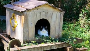 M's cat shelter. (Beth Clifton photo)