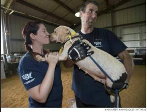 Kissing any newly impounded dog, let alone a known fighting dog, sets a bad example. (HSUS photo)