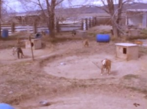Holbrook dog yard.