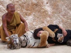 """Another """"Tiger Temple"""" publicity photo"""
