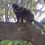 Culling cats increases the feral population,  Australian study finds