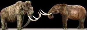 Woolly mammoth & mastodon. (Wikipedia photo)
