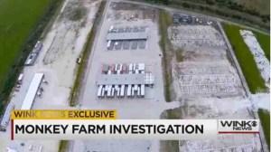 Monkey Farm investigation