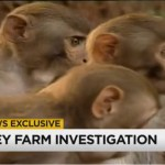 Forced abortions raise alarm over Florida lab monkey breeders