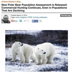 NRDC polar bears