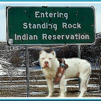 """Pit bull proliferation hits """"Indian country"""": fatal dog attacks triple"""