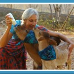 """""""ANIMALS 24-7 is right"""" on pit bulls,  says Animal Aid India"""