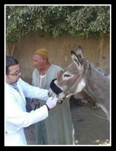 (Egyptian Society of Animal Friends photo)