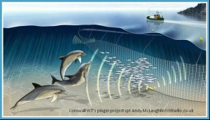 Pingers are used to protect harbor porpoises from fish nets. (Wildlife Trusts image)