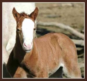 Foal at ISPMB. (ISPMB photo)