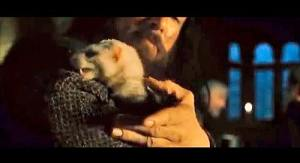 """The ferret at the Inn of the Prancing Pony,  in """"The Fellowship of the Ring."""""""
