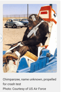 """Chimp prepped for U.S. Air Force rocket sled crash experiment circa 1956. John Paul Stapp, the first U.S. space research supervisor, had ethical qualms about the work, and in 1946-1947 used himself as the subject of the first such experiments. Recalls the web site , """"When after many months the results of all Stapp's work was presented to the Aero Med Lab brass, they were horrified. ŠStapp was told in no uncertain terms that human tests had to end. Chimpanzees, his superiors advised, would be acceptable substitutes."""""""