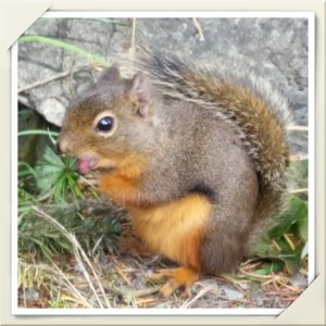 Cub reporter investigates a nut. (Beth Clifton photo)