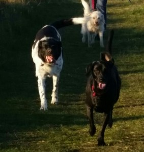 Three-dog night. (Beth Clifton photo)