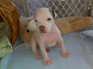 Trooper needed constant care and medical treatment during the first few months of his life. (Beth Clifton)
