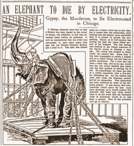 Thomas Edison was not the first to electrocute an elephant.   Gypsy,  above,  was electrocuted nine years before Edison killed Topsy.