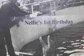 Marineland of Florida celebrated many of Nellie's birthdays.
