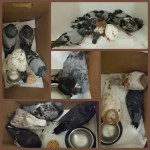 How 28 pigeons survived U.S. Senator Inhofe's shooting party