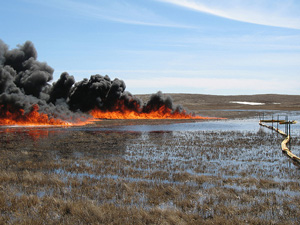 A controlled burn of crude oil spilled on a wetland in Mountrail County, North Dakota. (U.S. Fish & Wildlife Service photo)
