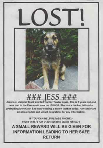 LOST poster - make a missing poster