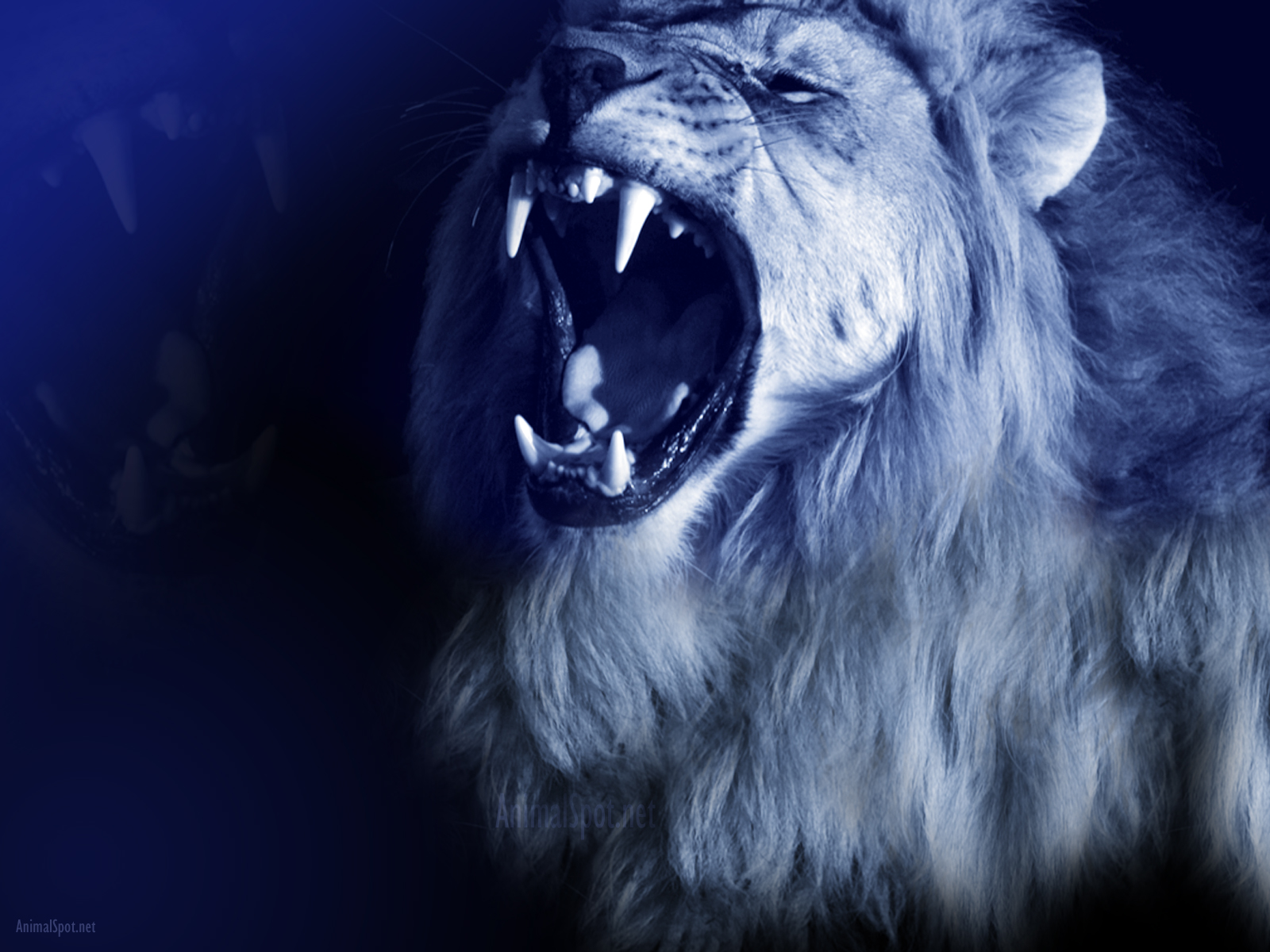 Lion Wallpapers Animal Spot