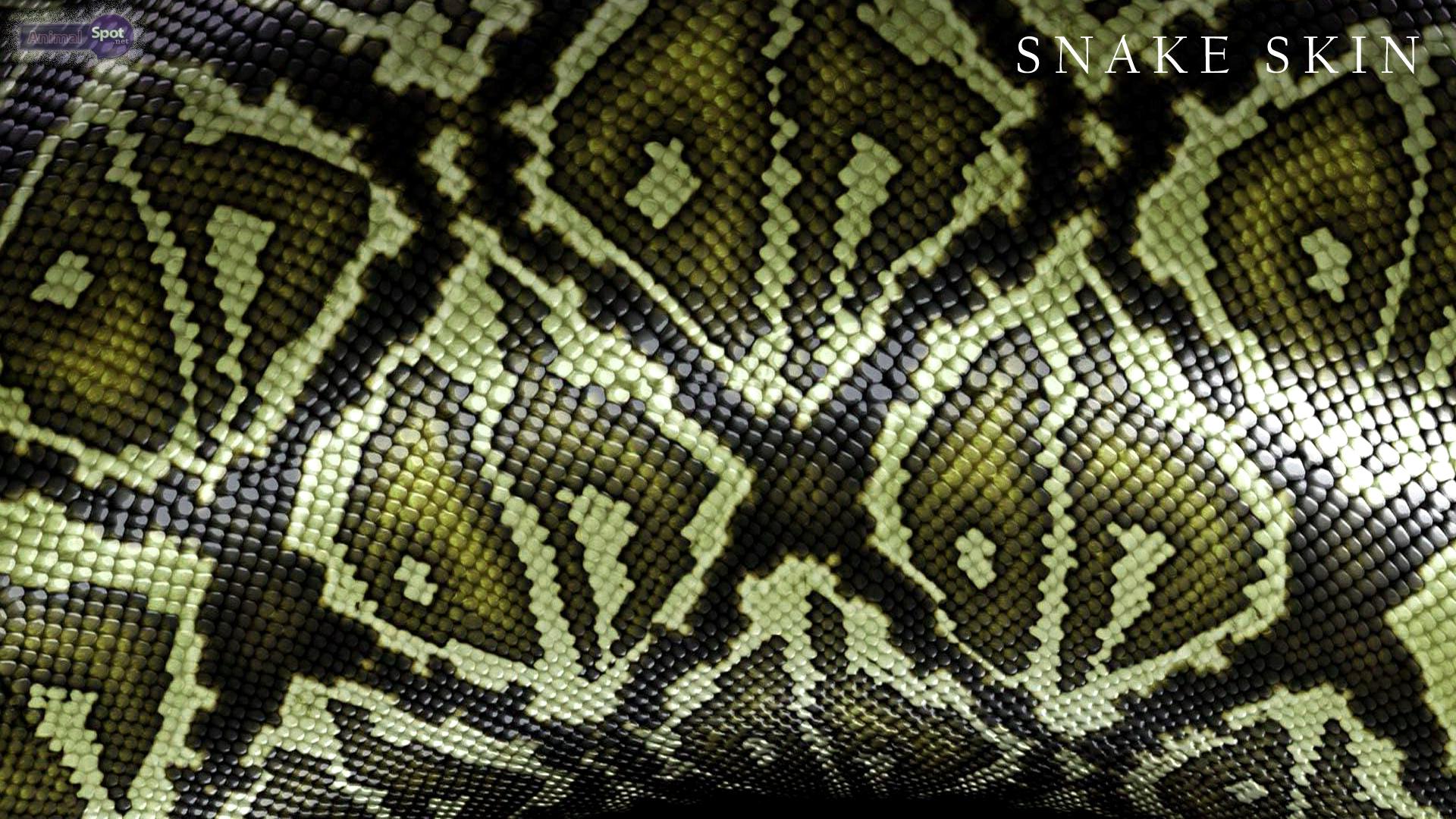 3d Animal Wallpapers Desktop Free Download Snake Wallpapers Animal Spot