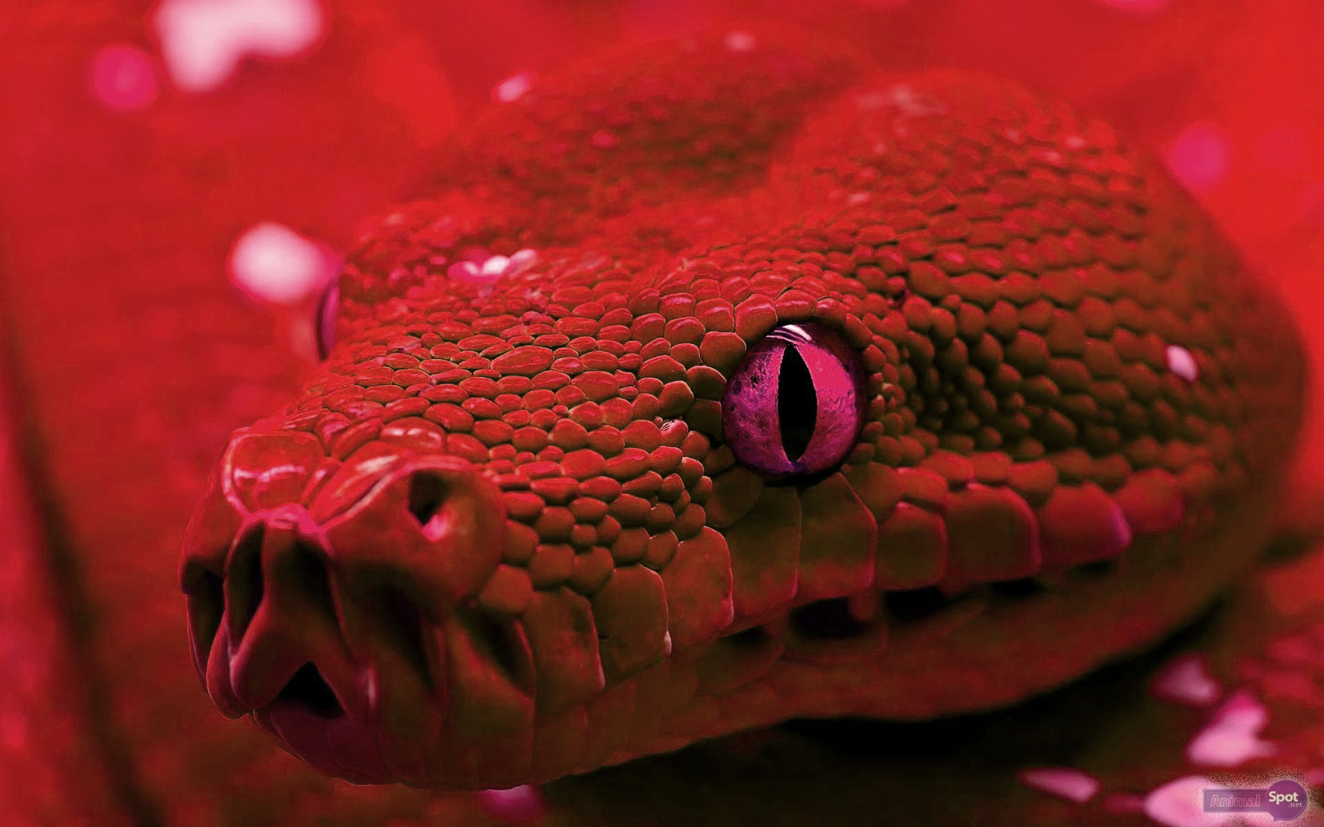 3d Dangerous Snake Wallpaper Desktop Snake Wallpapers Animal Spot