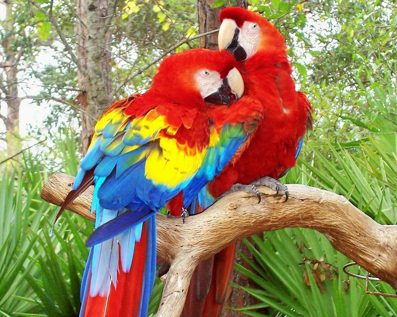 Animal Print Desktop Wallpaper Parrot Wallpaper And Background Animals Town