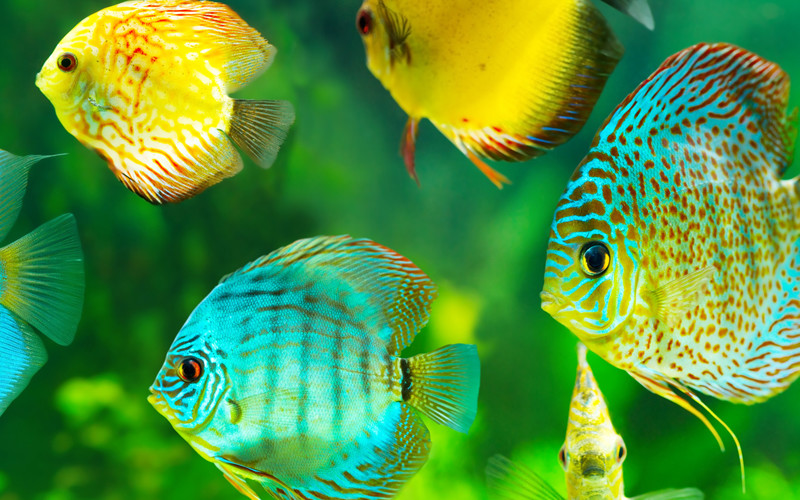 Classification of fish, Fishes, Characteristic of fish, Fish, Types