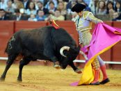 the-bullfighting1