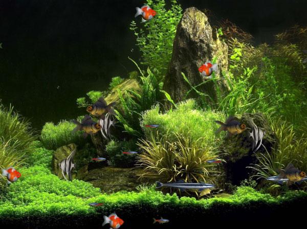 Dreamscene Animated Wallpaper Windows 7 Virtual Aquarium Animated Wallpaper 1 0 0 Free Download