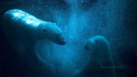 tips on how to photography polar bear