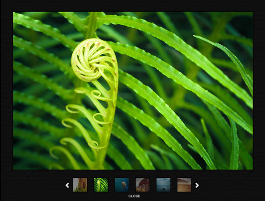 jQuery Image Gallery with Twelve Transition Effects