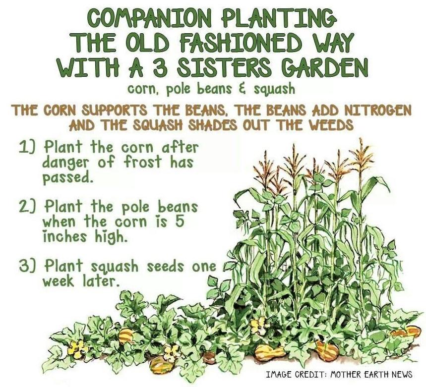 For Love of Gardening